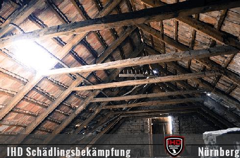 Steinmarder am Dachboden